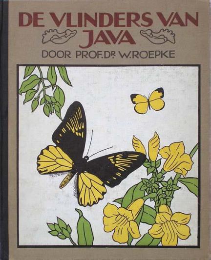 kaft vlinders van Java